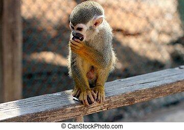 Monkey eating fruit in the monkey park