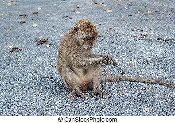 Monkey eating on the ground