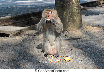 Monkey eating on the ground
