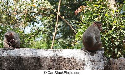 Monkey family in tropical forest