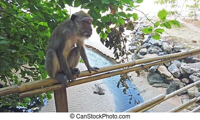Monkey from tree in jungle forest - Monkey from tree in...