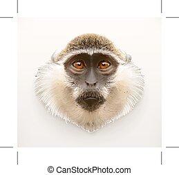 Monkey head, realistic vector illustration