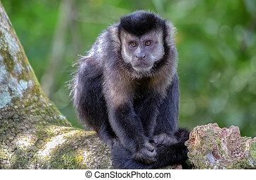 Monkey in argentine jungle 2