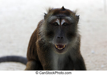 Monkey in Boracay - Exotic animals, tropical animals,Boracay...