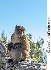 Monkey in the afternoon sun