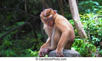 monkey in the forest sits on a rock and looks around