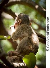 Monkey in the sun