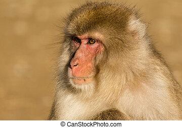 Monkey in wild life