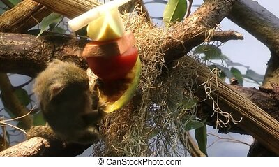 Monkey is eating on tree in nature