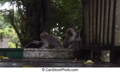 Monkey jumping in Monkey Forest Bali Indonesia in slow...