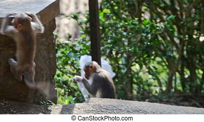 Monkey Jumps up on Stone Post in Park - small monkey jumps...