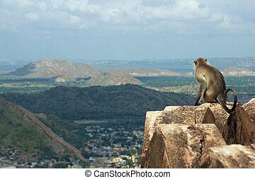 Monkey Keeping a Lookout