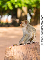 monkey looking for food