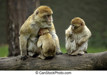 Monkey mother mad at child