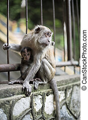 Monkey Mother with Baby on Fence