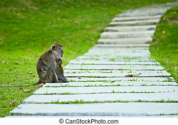 Monkey mother with baby resting on a walkway