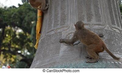 Monkey. Nepal.