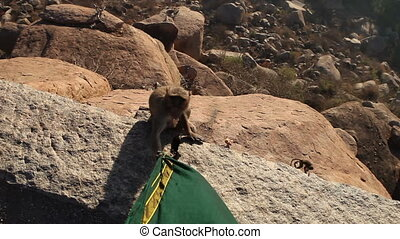 monkey nibbles dress sitting on the edge of a cliff at sunrise
