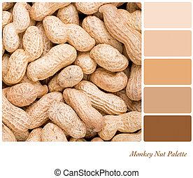 Monkey Nut Palette