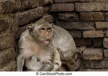 Monkey of face at wall.