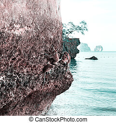 Monkey on a rock on the beach in Thailand
