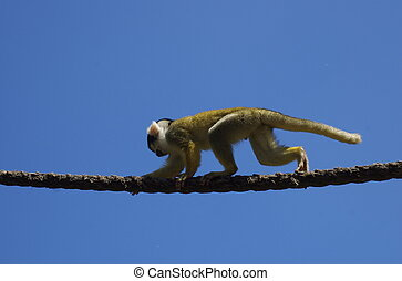 Monkey On A rope