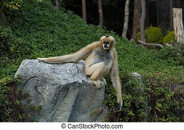 Monkey on a stone