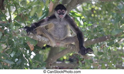 Monkey on a tree in the wild