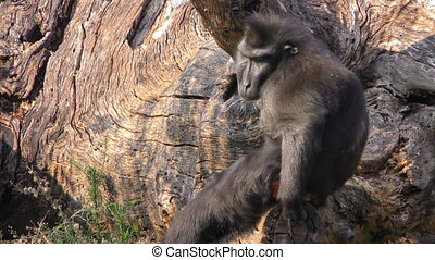 Monkey on Dry Wood in Nature
