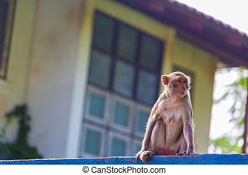 Monkey on fence