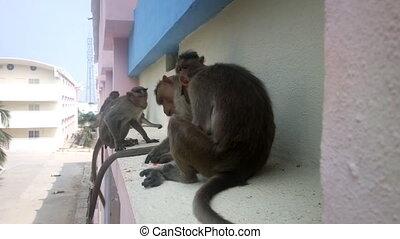 Monkey on ledge of multistory building 1. Problem of...