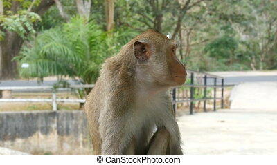 Monkey on rail close up view - Monkey on the rail close up...