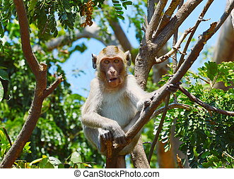 monkey on the branch