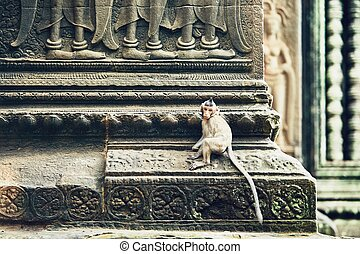 Monkey on the temple wall