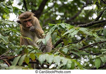 Monkey on the tree.
