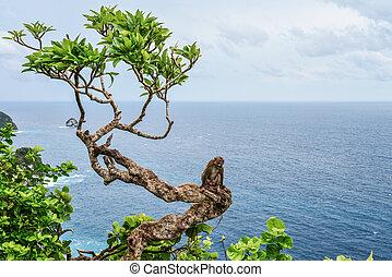 Monkey on the tree near Kelingking Beach