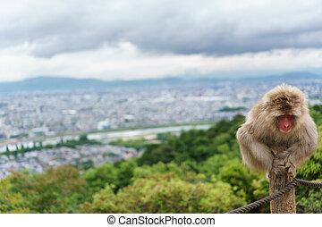 Monkey on top of trunk in Arashiyama, kyoto