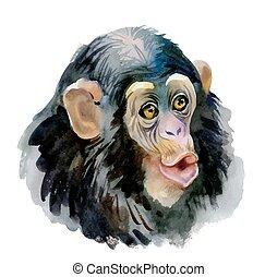 Monkey oriental animal ink painting illustration