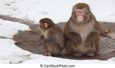 monkey parent with child - Monkey parent with child.