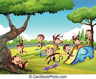 Monkey playing at playground
