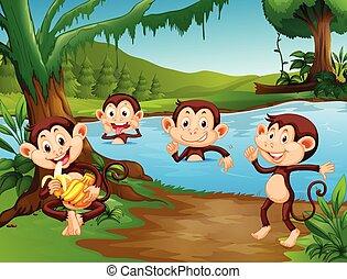 Monkey playing at the lake