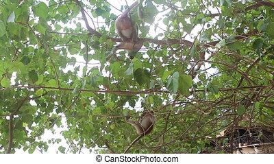 monkey sit on tree - big monkey sit on a tree and small...