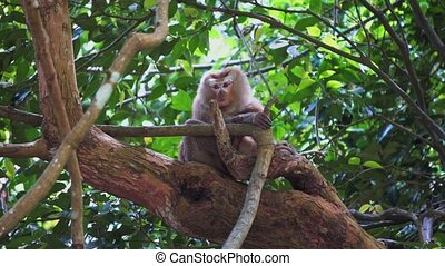 monkey sits on a tree branch in the jungle