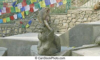Monkey sits on the statue in Swayambhunath temple....