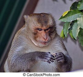 Monkey sitting, looking for food