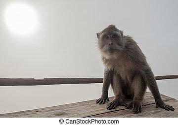 monkey sitting on a stone