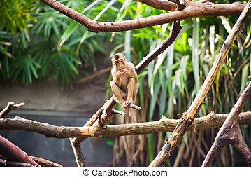 monkey sitting on a tree branch