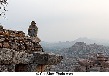 Monkey sitting on the ruins of an old temple at dawn in Hampi, K