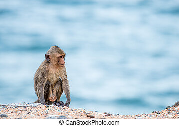monkey sitting on the sand with sea background