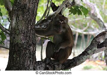 Monkey sitting on the tree - Exotic animals, tropical...